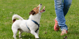dog exercising in park
