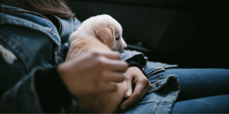 taking your puppy home