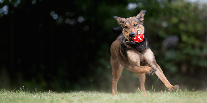 mixed breed dog playing with ball